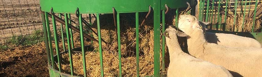 Why a Round Bale Is the Best for Feeding Goats