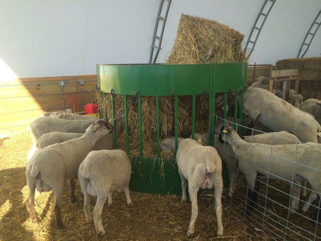 the hay manager round bale cone feeder for cow cattle horse sheep goat