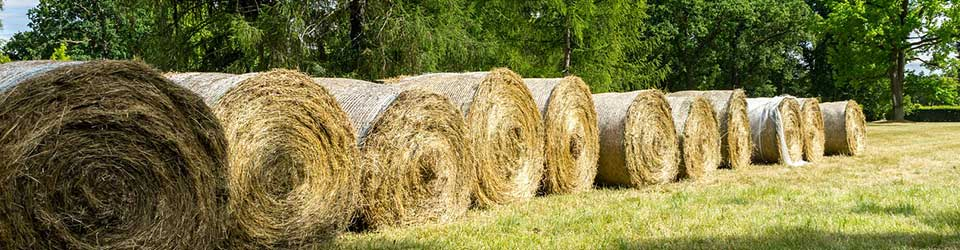 How to Identify Quality Hay for Horses