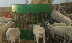 Sheep-Feeder-the-hay-manager