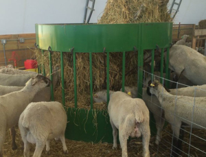 Why A Round Bale Is The Best For Feeding Goats The Hay Manager