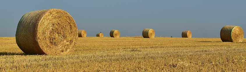 High-Quality Hay Comes Down to a Few Factors