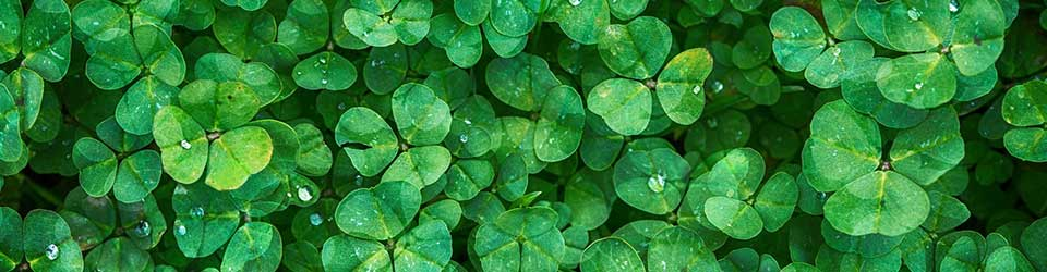Clovers Key to Nitrogen-Rich Pastures