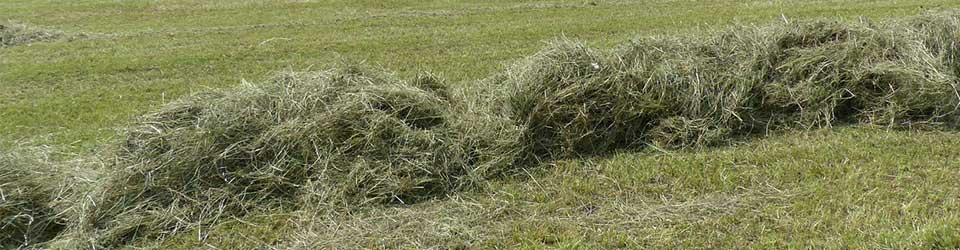 Forage Crops Unfairly Losing Ground in the Ag Industry
