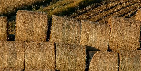 hay trade