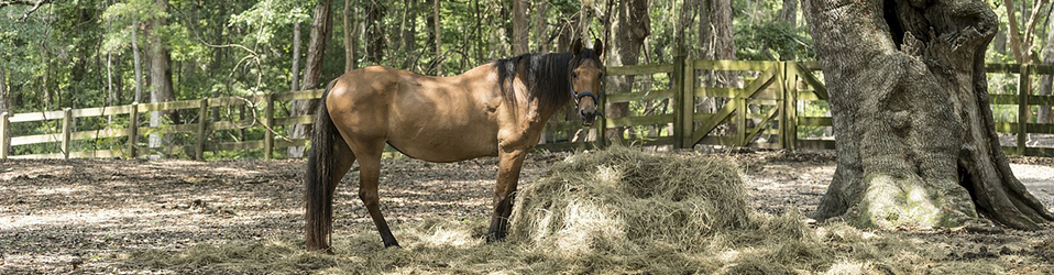 What Makes Hay Horse Quality? - The Hay