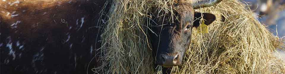 How Much Hay are Your Cows Wasting
