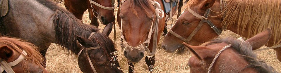 Six Factors that Determine Whether Your Horses are Being Fed High-Quality Hay
